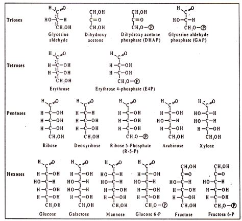 carbohydrates structure molecular structure of carbohydrates with diagram