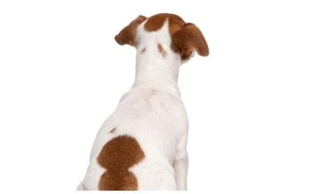 Sho Untuk Anjing buka usaha pet shop menjual aksesoris untuk anjing