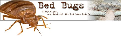 does heat kill bed bugs bed bugs does bleach kill bed bugs