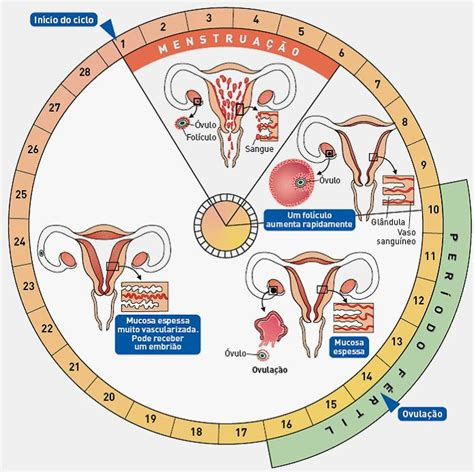 Calendario Ovulacion Descubre C 243 Mo Llevar El Tu Calendario De Ovulaci 243 N