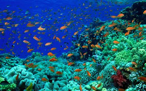 seawall luau grounds fish deep sea wallpapers wallpaper cave