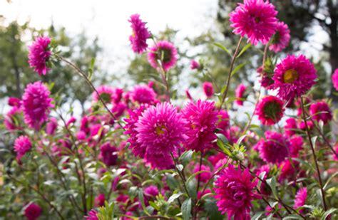 fiori di stagione settembre settembre ripartono mostre e manifestazioni con i fiori d