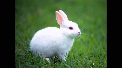 imagenes se animales sonido del conejo sonidos cortos de animales youtube