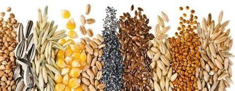 come si usano i semi di lino in cucina uomo salute e bellezza archivi erboristeria