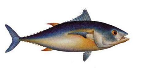 cucinare il filetto di tonno ricette con il filetto di tonno