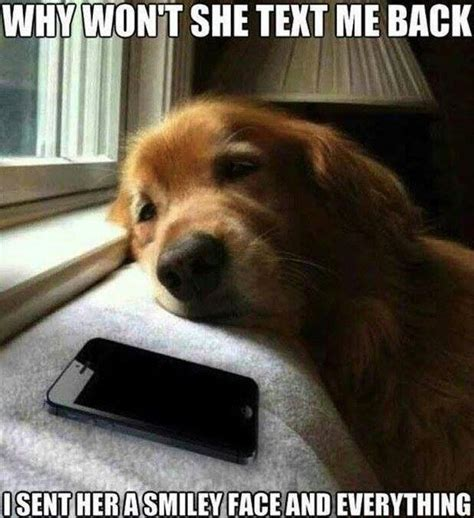 Sad Dog Meme - sad dog quotes memes