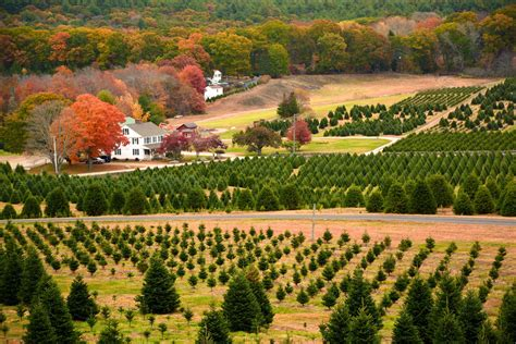 100 christmas tree farms in rhode island christmas