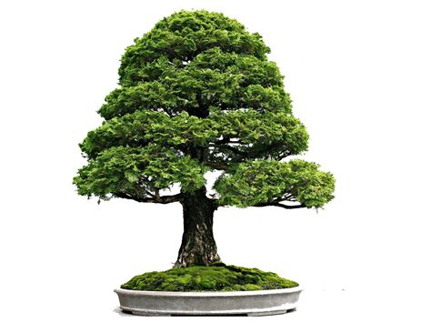here s a thought bonsai movement and flow in bonsai bonsaiplace