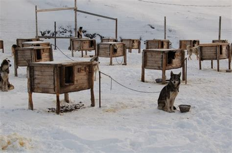 winter dog houses arctic dog houses