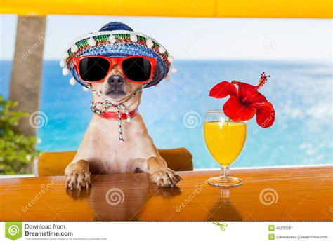 cocktail dogs cocktail stock photo image 45230287