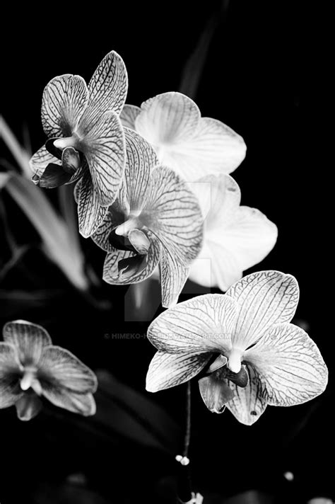black and white orchid wallpaper black and white orchid by himeko hime on deviantart