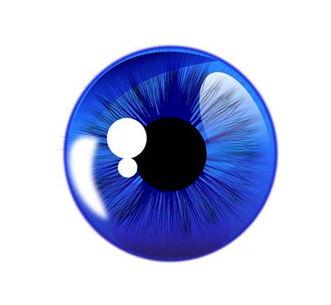 bola mata bunga iris gambar vektor gratis  pixabay