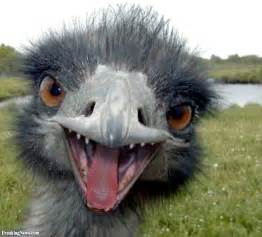 emu pictures freaking