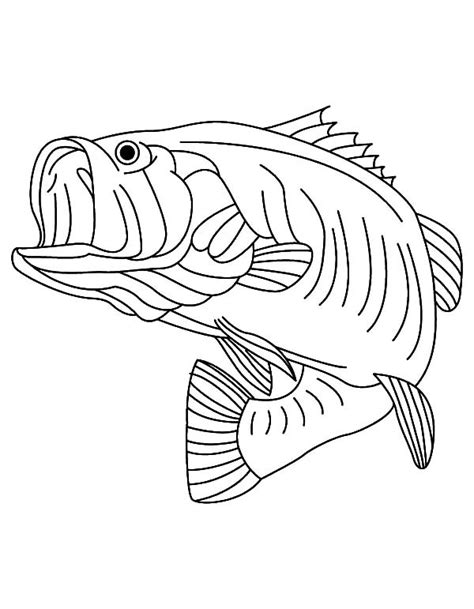 bass fish coloring pages free sea predator striped bass fish coloring pages best place