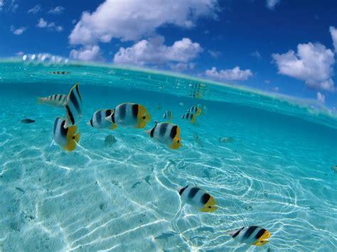 wallpaper laut cantik wallpaper ikan laut hd wallon