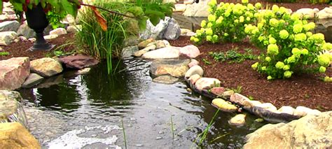 how much does a new pond cost