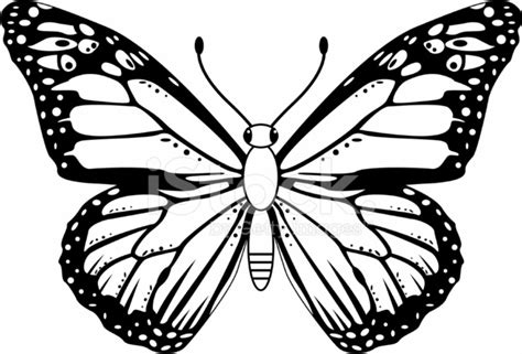 black amp white monarch butterfly stock vector freeimages com