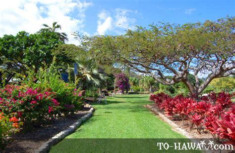 Garden Oahu Kapiolani Hibiscus And Garden Oahu