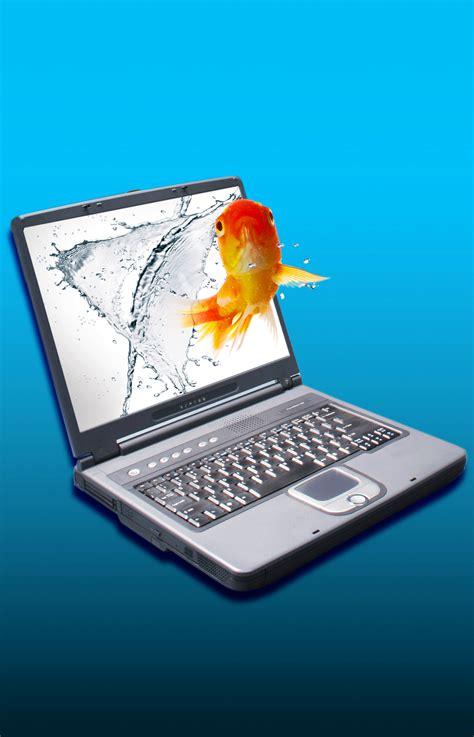 Lcd For Toshiba 141 Wide Glossy c 243 mo configurar la pantalla lcd de una laptop toshiba
