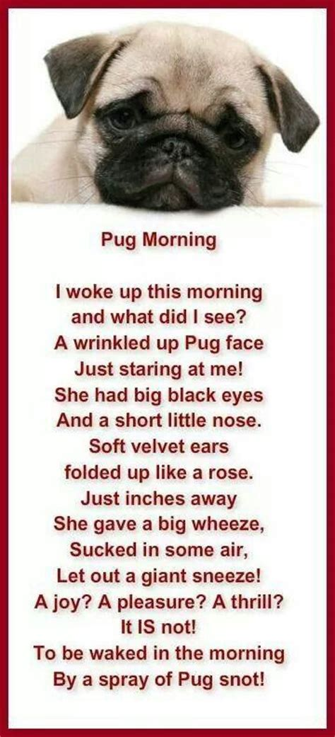 morning pug puppy poems breeds picture
