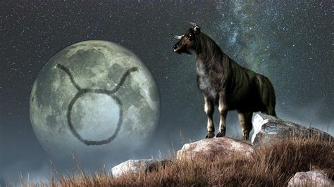 all you need to know about taurus the bull tulsa psychic