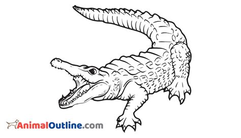 Crocodile Image Outline by Crocodile Animal Outline Pictures Images Clip