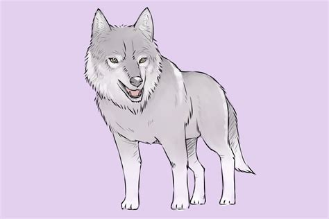a wolf 4 ways to draw a wolf wikihow
