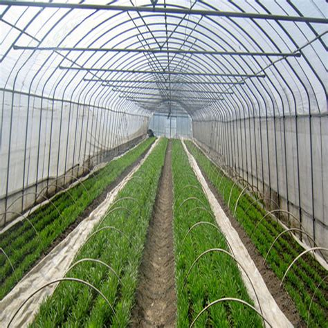 Plastik Green House Ultraviolet 6 uv plastic 8mil 200micron 4m x 50m greengold farms panga