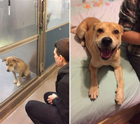 how much is it to adopt a puppy before and after photos show how much the day of adoption can to a shelter pet