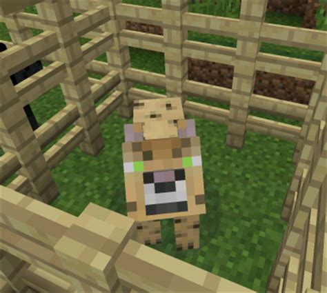 Leopard Big Pocket Edition 1 big cats mod minecraft pocket edition minecraft pe mcpe