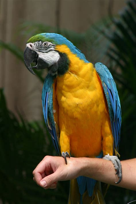 blue and gold macaw some of my favorite animals pinterest