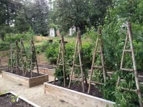 Pvc Trellis Systems Blackberry Trellis Idea The Yard Pinterest Gardens