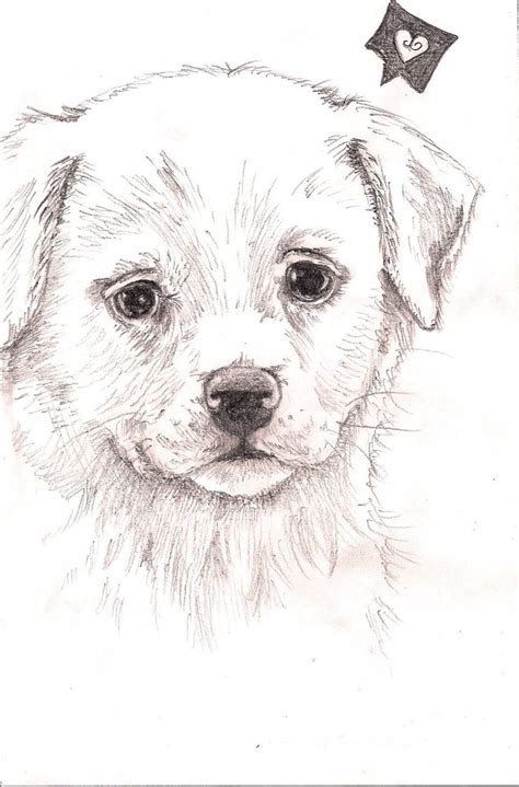 puppies drawings puppy drawing by fentown on deviantart