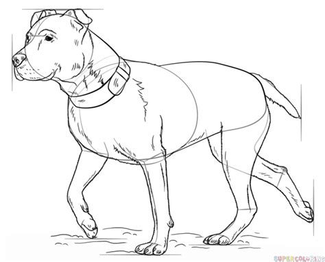 how to a pitbull how to draw a pitbull www imgkid the image kid has it