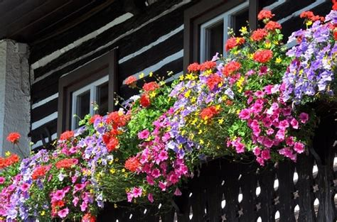 5 Common Balcony Gardening Problems and Tips to Solve them