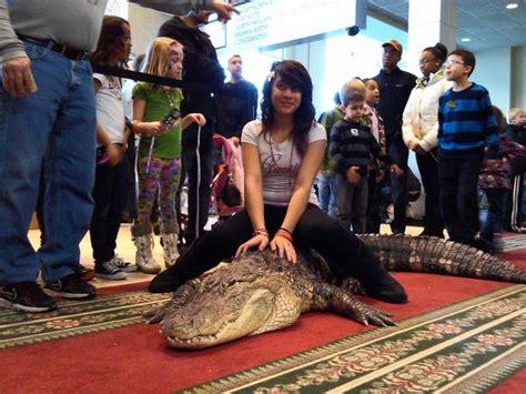 chicago reptile house tinley convention center comes alive for reptile show tribunedigital chicagotribune