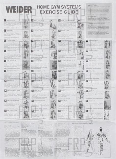weider pro 4100 wall chart anyone bodybuilding forums