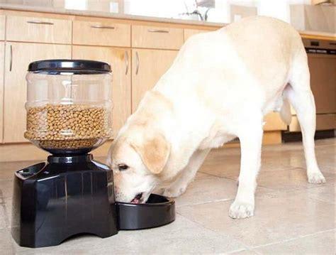 alimentadores automaticos para perros 7 mejores comederos autom 225 ticos para perros del