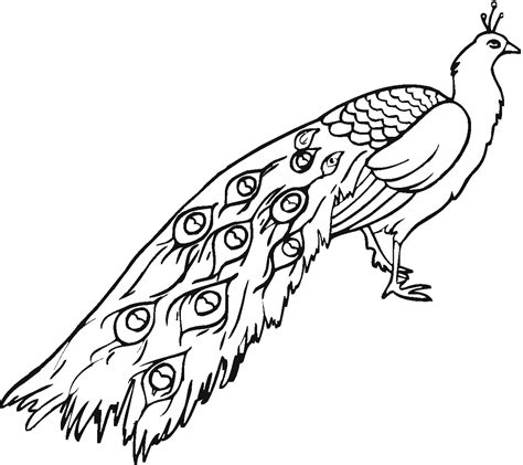 Coloring Pages Of Peacocks free printable peacock coloring pages for