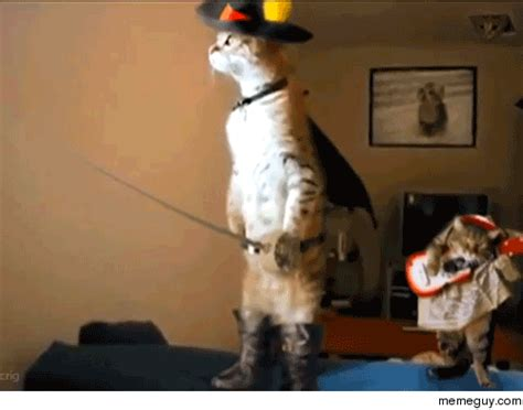 Cat Meme Gif - animals memes gifs find share on giphy