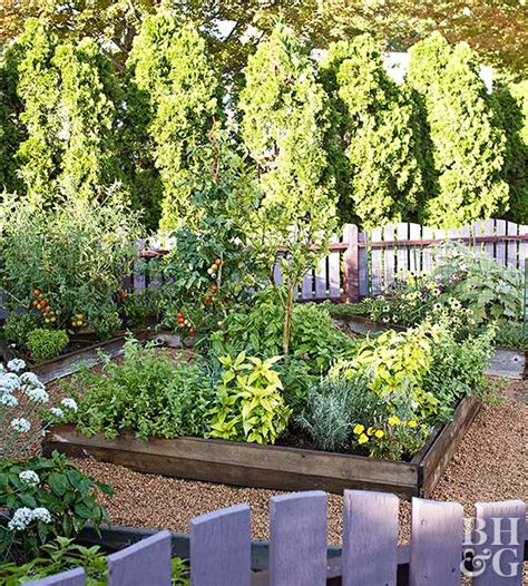 tips  growing  organic vegetable garden