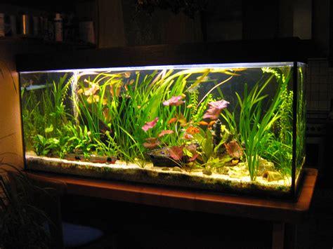Aquarium Mit Wurzeln Einrichten 6735 by Verkaufe Komplettes Aquarium Mit Abdeckung Beleuchtung