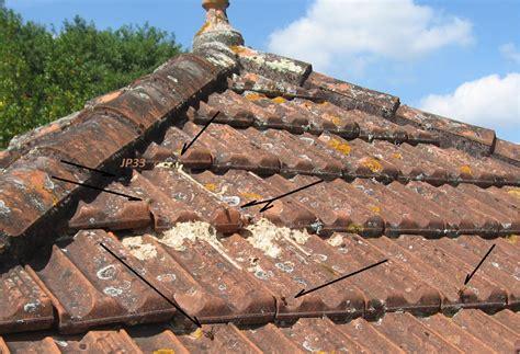 nid de frelons sous les tuiles agressivit 233 du frelon asiatique et danger pour l homme