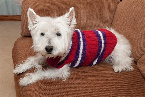 knitting pattern puppy jumper 5 pet knitting patterns for furry friends