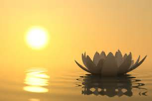 Lotus Meditation Meditation For Insomnia East Station