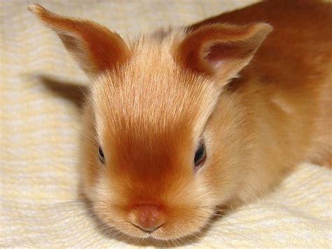 Blus Delena Jumbo mini satin bunny rabbit and animal