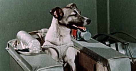 tragic facts  laika   dog  space listverse