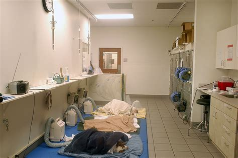 Recovery Room by Veterinary Hospital Design Ideas Images