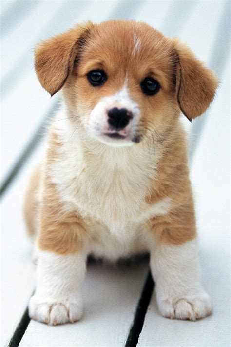 puppy pictures wallpapers shop puppy pictures puppy