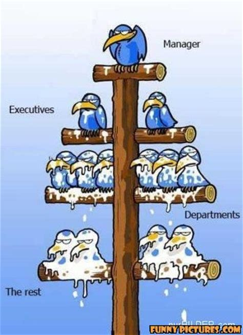 company hierarchy funnypictures co uk